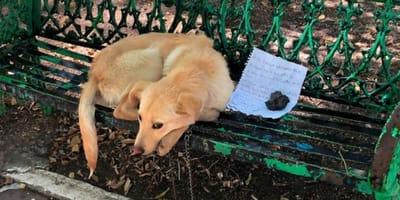 Pies porzucony na ławce