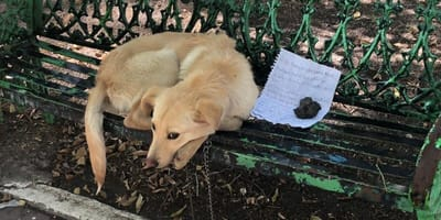 Child leaves heartbreaking letter with his dog to explain why he abandoned him
