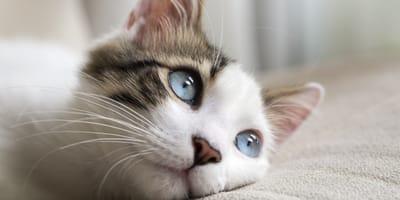 gato-michi