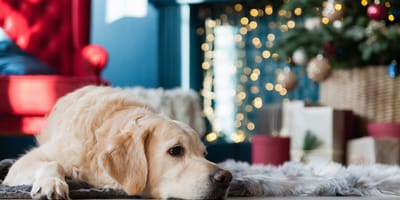 What to do with your pet if you're going away for Christmas