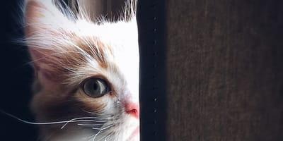 gato triste video