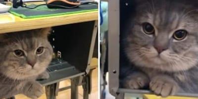 Kot pod szkolną ławką.