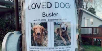 Lost dog poster is not what you'd expect, and leaves readers heartbroken