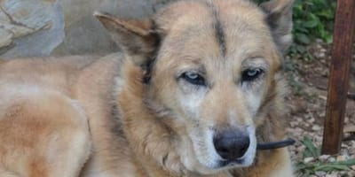 """No one wants to give this former stray a loving home because he's """"too old"""""""