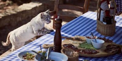 Possiamo salvare il mondo con il cibo biologico per gatti?
