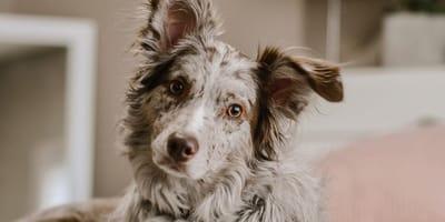 Frauchen legt sich ins Hundebett: Reaktion von Border Collie könnte nicht schöner sein