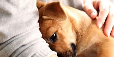 Ein Hund kuschelt sich eng an den Menschen.