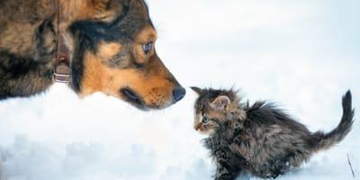 Pies widzi porzuconego na śniegu kociaka. To, co robi, jest niebywałe! (VIDEO)