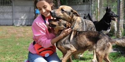 perros mestizos juegan con una chica