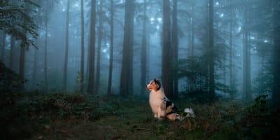 Magisch und geheimnisvoll: Mystische Hundenamen