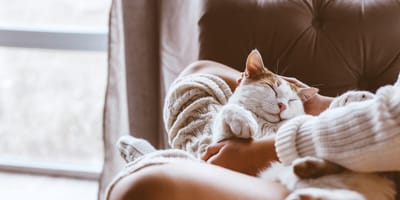 5 trucos para que tu gato sea el rey de la casa