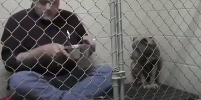 Weterynarz w klatce z psem