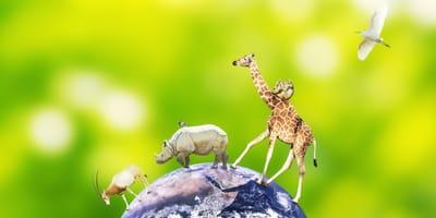 dia mundia animales 2020