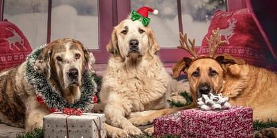 cani-con-pacchi-regalo