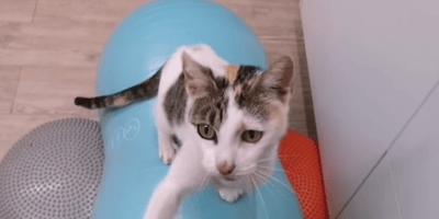 gato-paralitico