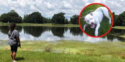 Pitbull im See: Als sich im Wasser etwas bewegt, brüllt das Frauchen vor Schreck!