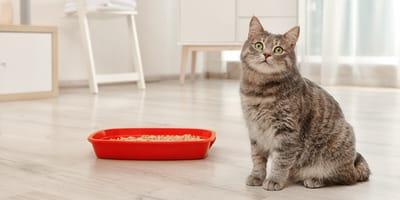 Zapalenie pęcherza u kota - rozpoznanie i leczenie