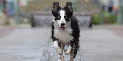 perro-abandonado-corriendo