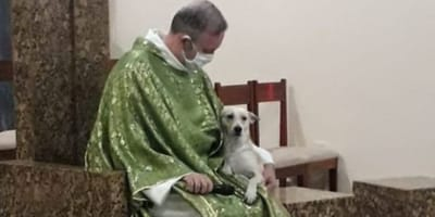 sacerdote adopta perros calle