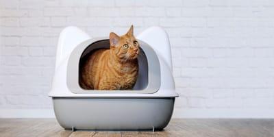 Cacca di gatto: cosa dice sulla salute di Micio?