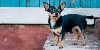 Cucciolo rubato: dopo una telefonata anonima, la sua vita si capovolge