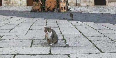 gatti in piazza