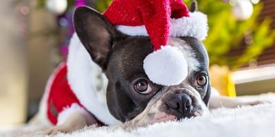 ¿Cómo hacer un traje de Navidad para perros?