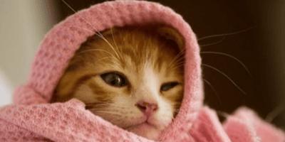 gato envuelto en manta