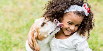 beagle licking young girl's face