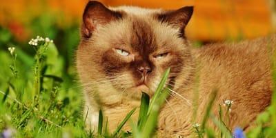 Una dieta con cibo per gatti grain free è possibile?