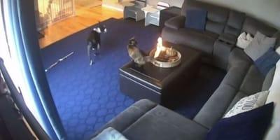 coda del gatto prende fuoco a casa