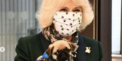 Camilla, Duchess of Cornwall and rescue dog