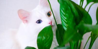 Giftige Pflanzen für Katzen: Bei diesen Blumen müssen Sie aufpassen