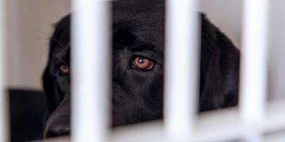 perro negro triste enjaulado