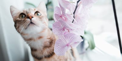 Kot obok storczyka