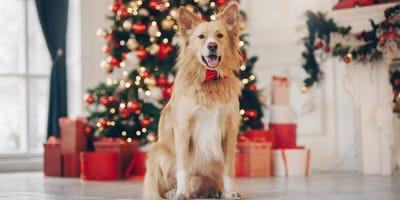 ¿Cómo proteger el árbol de Navidad del perro (y viceversa)?