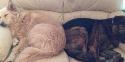 Grieving dog who can't stop crying after losing his brother gets a special gift