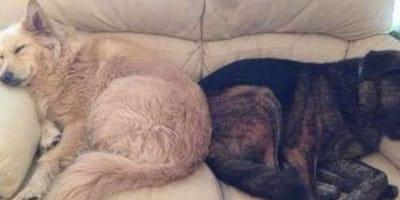 Dopo aver perso il suo amico, un cane in lutto riceve un regalo speciale