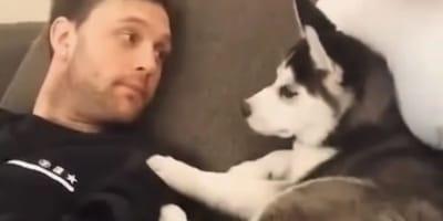 Man talks to Husky puppy