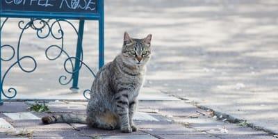 <p>Kotka przyszła do kawiarni szukać pomocy</p>