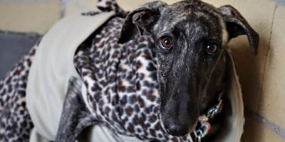 This dog's eyes says it all: Can she ever learn to trust again?