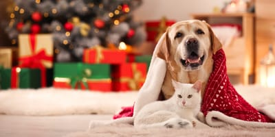 Keep your pet safe this Christmas with these holy tips