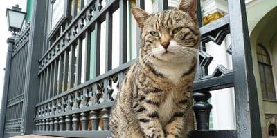 gatto in strada