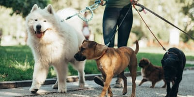 10 Questions to ask your dog walker