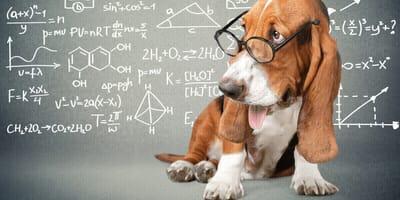 Schlaue Schnauzen: Die 10 klügsten Hunderassen