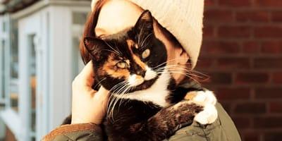 gatto tricolore in braccio a ragazza
