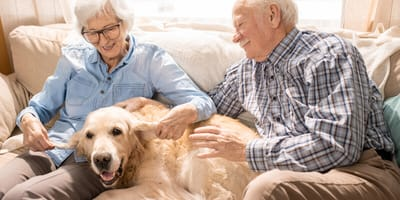 Which are the best dog breeds for seniors