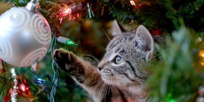 Árbol de Navidad anti gatos: la solución para que tu felino no lo destroce