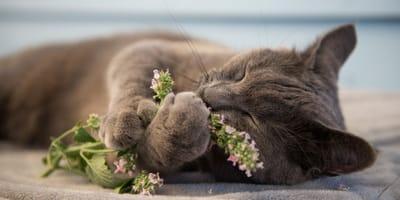 Non solo erba gatta: tutti i profumi che piacciono ai gatti