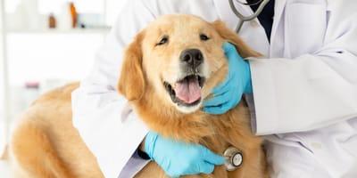 Síntomas de cáncer en perros y tipos más comunes: ¡Detéctalos a tiempo!